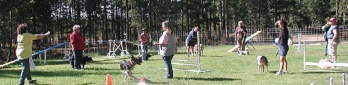 K9Kapers Dog Agility Training